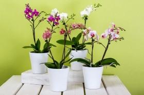 Migliori Vasi per Orchidee