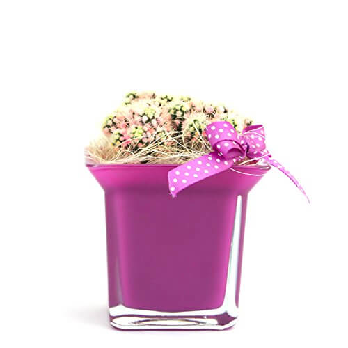 Vasi per piante grasse homehome - Vasi per piante grasse ...