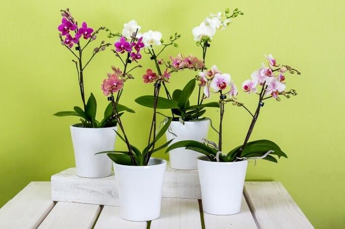 Vasi come abbellire gli spazi con stile homehome for Vasi grandi per interni